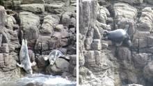 Robben auf St. Marys