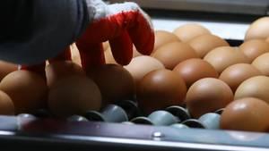 Fipronil: Eine Hand greift nach einem Ei in einem Sortiment im Supermakt