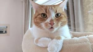 Die Katze ist das beliebteste Haustier der Deutschen. Dabei ist Jack ja eigentlich ein Kater.