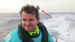 Volvo Ocean Race: Vogel macht Rast auf einem Profi-Segler