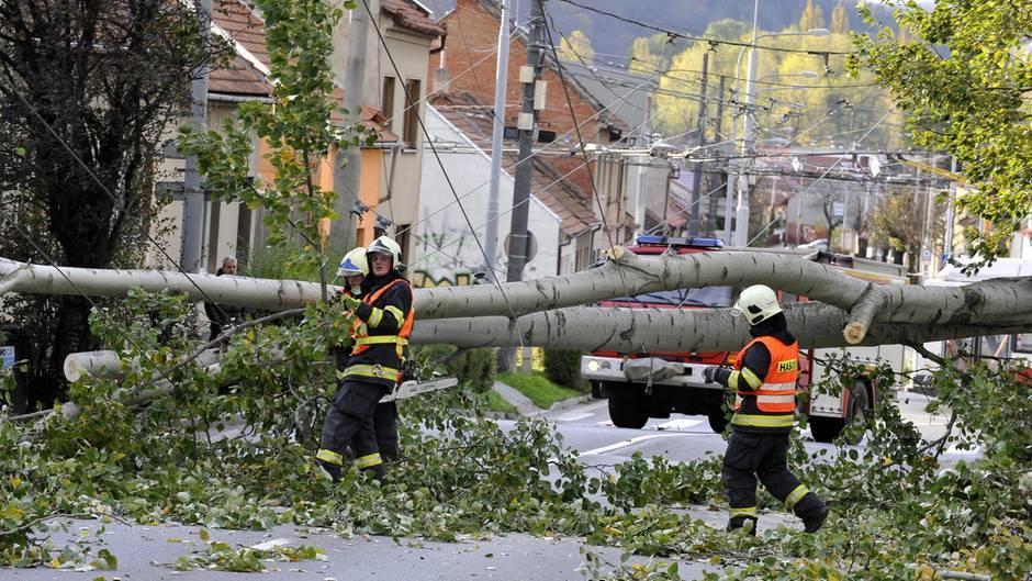 """Chaos durch Herbststurm """"Herwart"""": Zahlreiche Bäume stürzten um und behinderten Bahn und Straßenverkehr"""