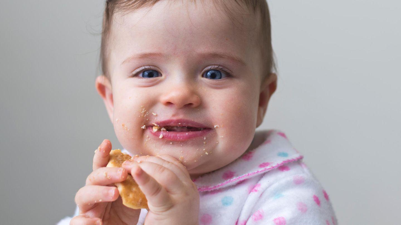 Ein Baby isst einen Kinderkeks.