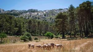Deutsche stürzt beim Wandern auf Mallorca in den Tod