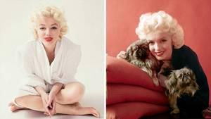 Starfotograf Milton H. Greene fotografierte Marilyn Monroe