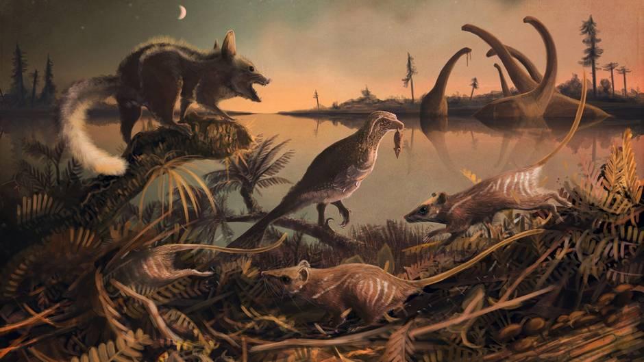 Klein, irgendwas zwischen Ratte und Maus und nachaktiv: So könntendie frühesten bekannten Säugetier-Vorfahren der Menschen ausgesehen haben