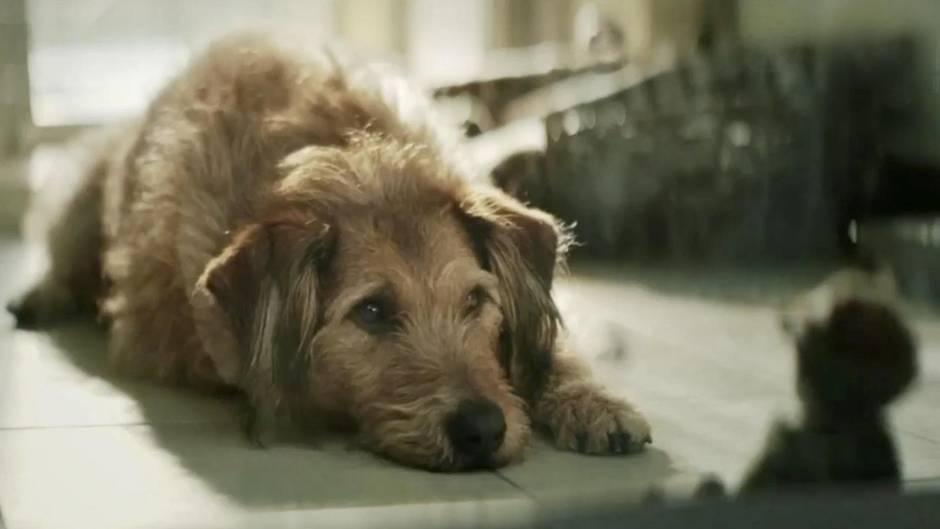Empathie: Warum wir mit Hunden mehr Mitgefühl haben als mit vielen Menschen