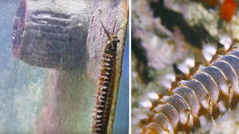 Klimawandel: Überhitzte Meere bedrohen Korallenbestände