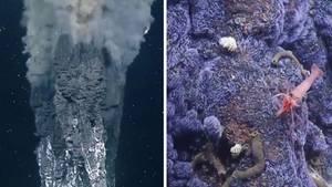 Mysteriöse Wunderfontänen im Meer
