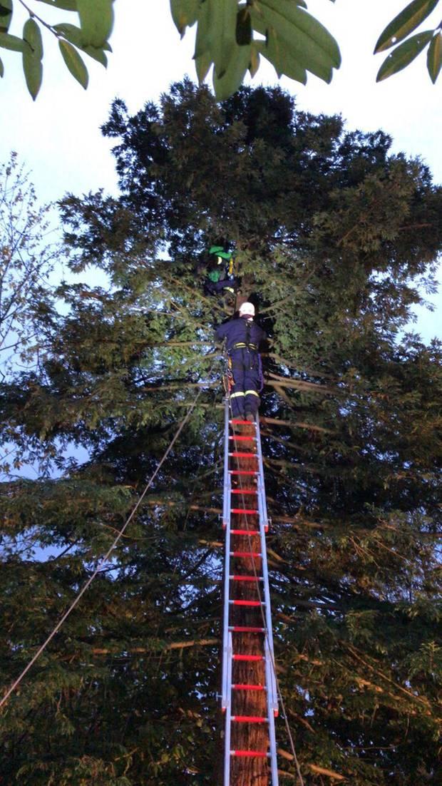 Aufwendige Rettungsaktion in Erkrath: Feuerwehrleute sind auf einer Leiter zu dem Jungen hochgeklettert
