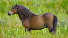 Ein Pony soll von einem Mann in Berlin sexuell missbraucht worden sein (Symbolbild)