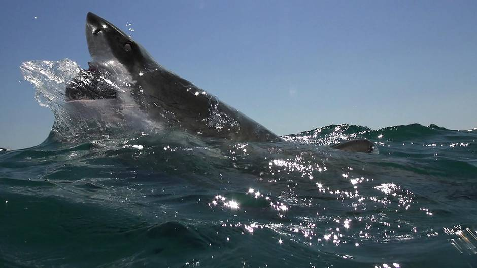 Haiangriff - Charlie Fry - Australien