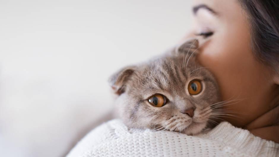 Haustiere: Katzen haben die intelligenteren Besitzer