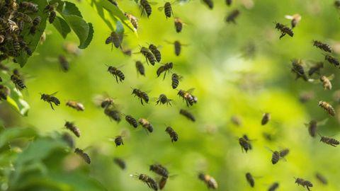 Bienen fliegen in der Luft