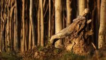 Eine in braunen Schattierungen bemalte Frau liegt auf einer Baumwurzel