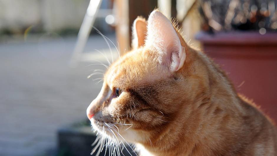 Eine Katze sitzt in Utrecht