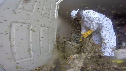 Hobby-Imkern: Achtung, diese Bücher machen Bienensüchtig