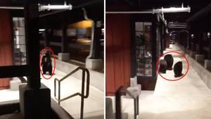 Kalifornien: Bären-Bande macht nächtlichen Shopping Boulevard unsicher