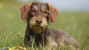 Mecklenburg-Vorpommern: Einbrecher töten Hundefamilie - nun stirbt auch die Dackelmutter