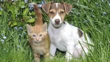 Studie: Hunde sind schlauer als Katzen
