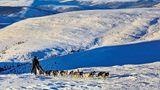 Beim legendären Yukon Quest in Alaska, dem härtesten Hundeschlittenrennen der Welt: Matt Hall, einer der großen Favoriten des Rennens und Lokalmatador, auf dem Weg zum Eagle Summit. Der Sohn des bekannten Mushers Wayne Hall wird in diesem Rennen als Vierter ins Ziel kommen.