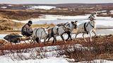Die Nenzen sind Rentiernomanden. Knapp 41.000 dieser Ureinwohner siedeln heute im europäischen Teil Russlands und im Nordwesten Sibiriens. Sie nutzen den Schlitten als Transportmittel, und dies selbst im Sommer, wenn aller Schnee geschmolzen ist.