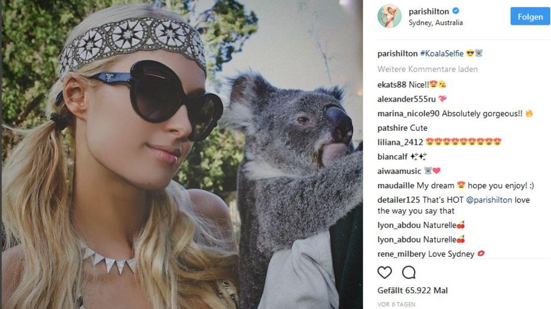 Instagram blockiert Selfies mit Wildtieren