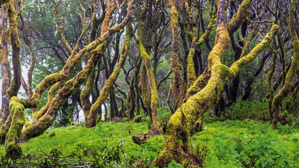 Gespenstisch wirkt der Nebelwald in den Bergen