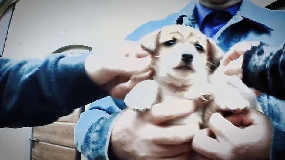 Beitrag vom 13.12.2017: Insider packt aus: So skrupellos geht die Welpenmafia beim Handel mit Hundebabys vor
