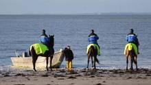 Bretteville-sur-Ay, Frankreich: Austernzucht hat in Frankreich ein besonderen Stellenwert. Um Austerkulturen an der Nordküste Frankreichs vor möglichem Diebstahl zu schützen, haben sich Polizeibeamte auf die Pferde geschwungen und patrouillieren am Strand.