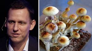 Peter Thiel und Magic Mushrooms