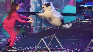 Alexa Lauenburger während ihrer Hundeshow beim Supertalent 2017