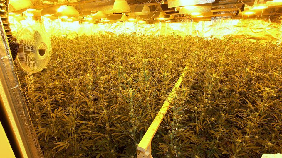 nachrichten deutschland - marihuana-plantage bremen