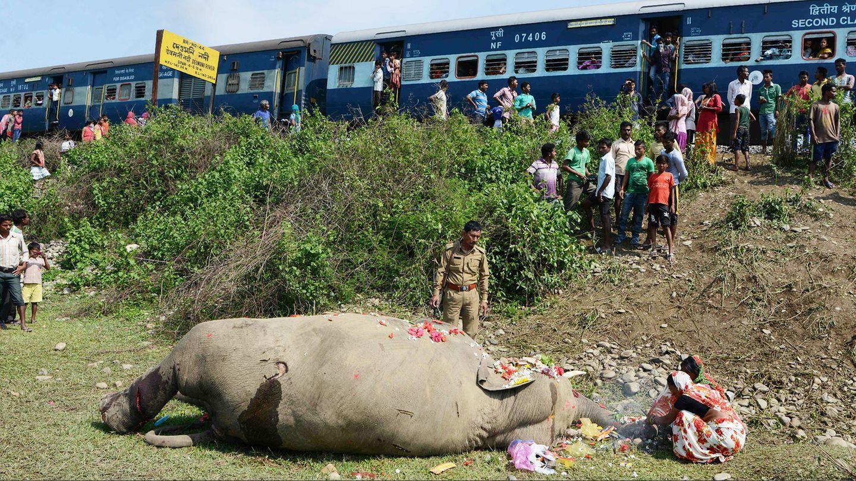 """Mai  Shiliguri, Indien. Traurig blicken Zugpassagiere und Forstleute auf einen toten Elefanten nahe der indischen Stadt Shiliguri. Das Tier war über die Gleise einer Eisenbahnlinie gelaufen und dabei von einem Zug erfasst worden. Das Gebiet, in dem sich der tragische Zusammenstoß ereignete, ist auch als """"Elefanten Korridor"""" bekannt."""