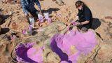 März    Dampier Peninsula, Australien. Das gab es noch nie: Im Westen Australiens fanden Forscher Spuren von gleich 21 verschiedenen Arten von Dinosauriern, mehr als 70 Millionen Jahre später. Die Wissenschaftler Linda Pollard undAnthony Romilio sind begeistert und schwer beschäftigt.