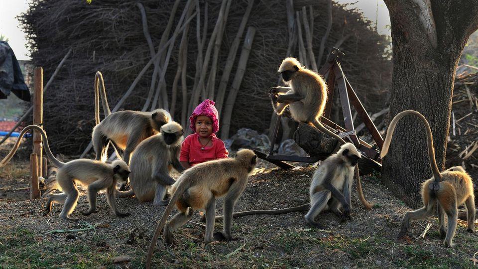 Ein kleiner Junge in Indien sitzt umringt von Affen auf dem Boden