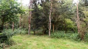 En Waldgebiet im südenglischen Salisbury