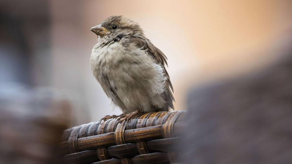 Passagiermaschine Vogel