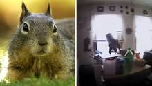 Eichhörnchen greift Polizisten an