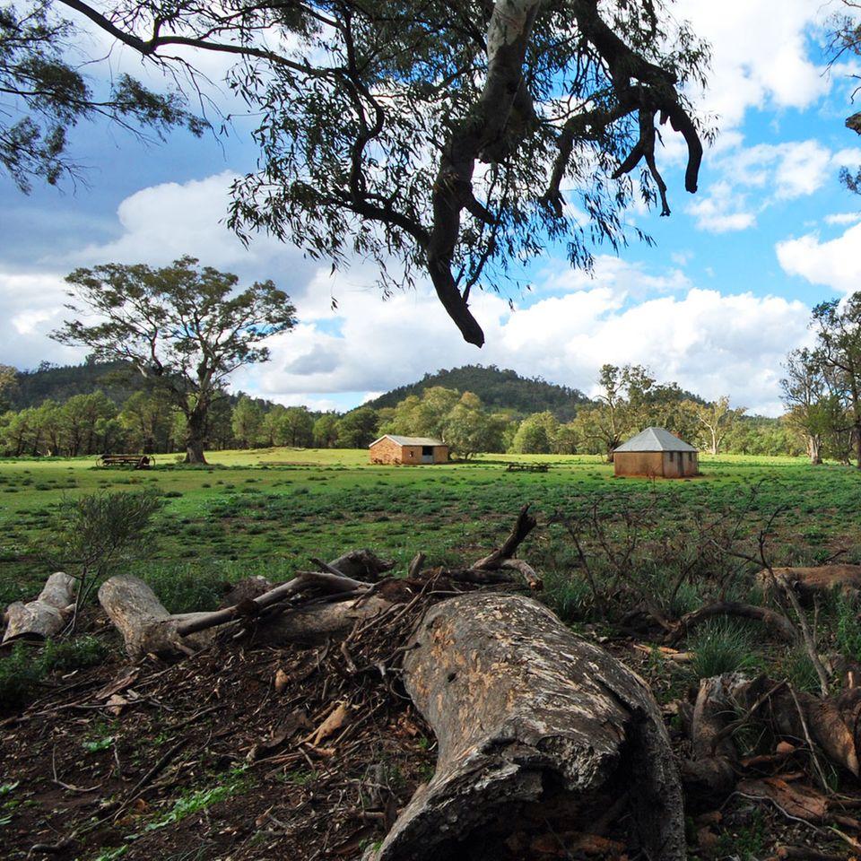 Wo die Menschen nur Rast machten: Vor 160 Jahren versuchten weiße Siedler, das Land urbar zu machen - nicht immer mit Erfolg. Von der Old Wilpena Station sind heute nur noch windschiefe Hütten unter knorrigen Eukalyptusbäumen übrig geblieben.