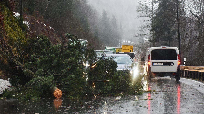 """Ein durch Sturmtief """"Burglind"""" umgeknickter Baum blockiert eine Bundesstraße"""
