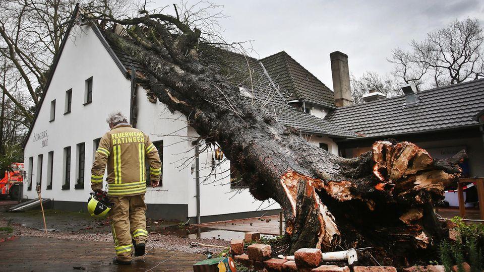 """Ein Baum liegt in Ratingen auf einem Haus. Sturmtief """"Burglind"""" ist teilweise mit Orkanstärke über NRW hinweg gezogen."""