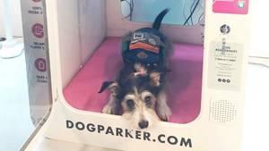 Ein Hund schaut aus der Tür einer Hundebox heraus