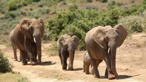 Addo-Elephant-Nationalpark