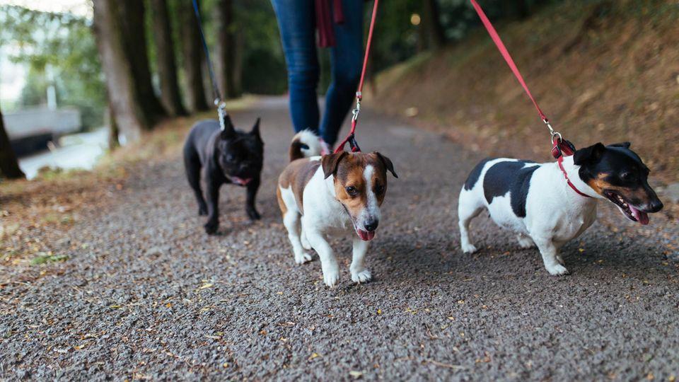 Hunde beim Spaziergang