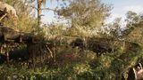 """World Disney World  Im """"happiest place on earth"""", so die Disney-Eigenwerbung, gibt es zwei Ecken, die in Vergessenheit geraten sind. In dem riesigen Freizeitpark bei Orlando holt sich in dem um die Jahrtausendwende aufgegebenen """"River Country"""" die Natur diese Wasserrutsche zurück."""