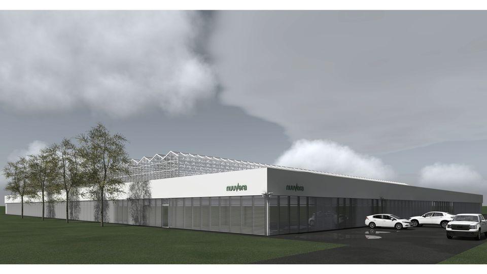 Modell eines Nuuvera-Greenhouse: Die Pflanzen wachsen unter kontrollierten Bedingungen im Gewächshaus