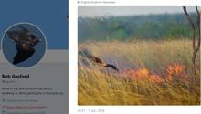 Tierische Brandstifter in Australien: Diese Vögel legen gezielt Buschfeuer