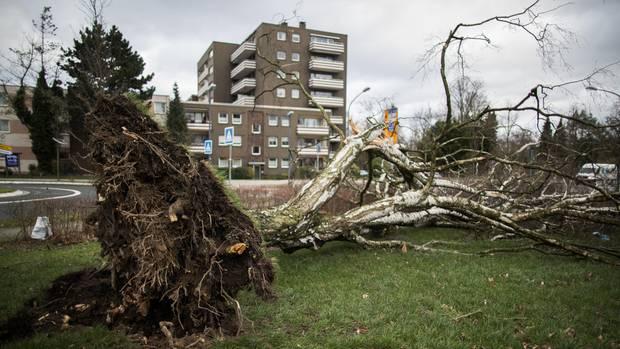 """Wie hier in Essen entwurzelte Sturmtief """"Friederike"""" vielerorts Bäume"""
