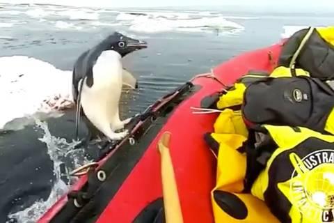 Willkommen an Bord: Pinguin springt auf Forscherboot - wohl nicht ganz aus Versehen