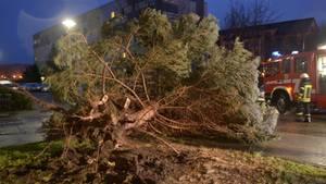 """Der Sturm """"Friederike"""" wütet über Deutschland: Ein entwurzelter Baum liegt in Senftenberg (Brandenburg) auf der Fahrbahn"""
